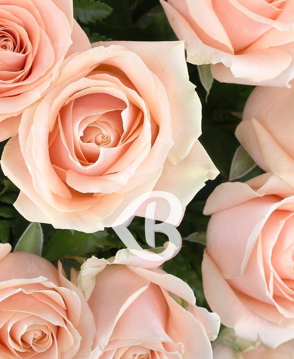 Imaginea produsului 35 Trandafiri Ivoir