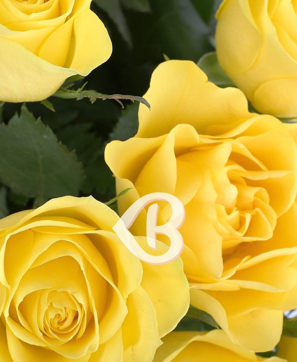 Imaginea produsului 39 Trandafiri Galbeni