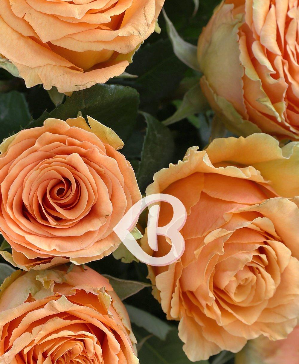 Imaginea produsului 35 Trandafiri Portocalii
