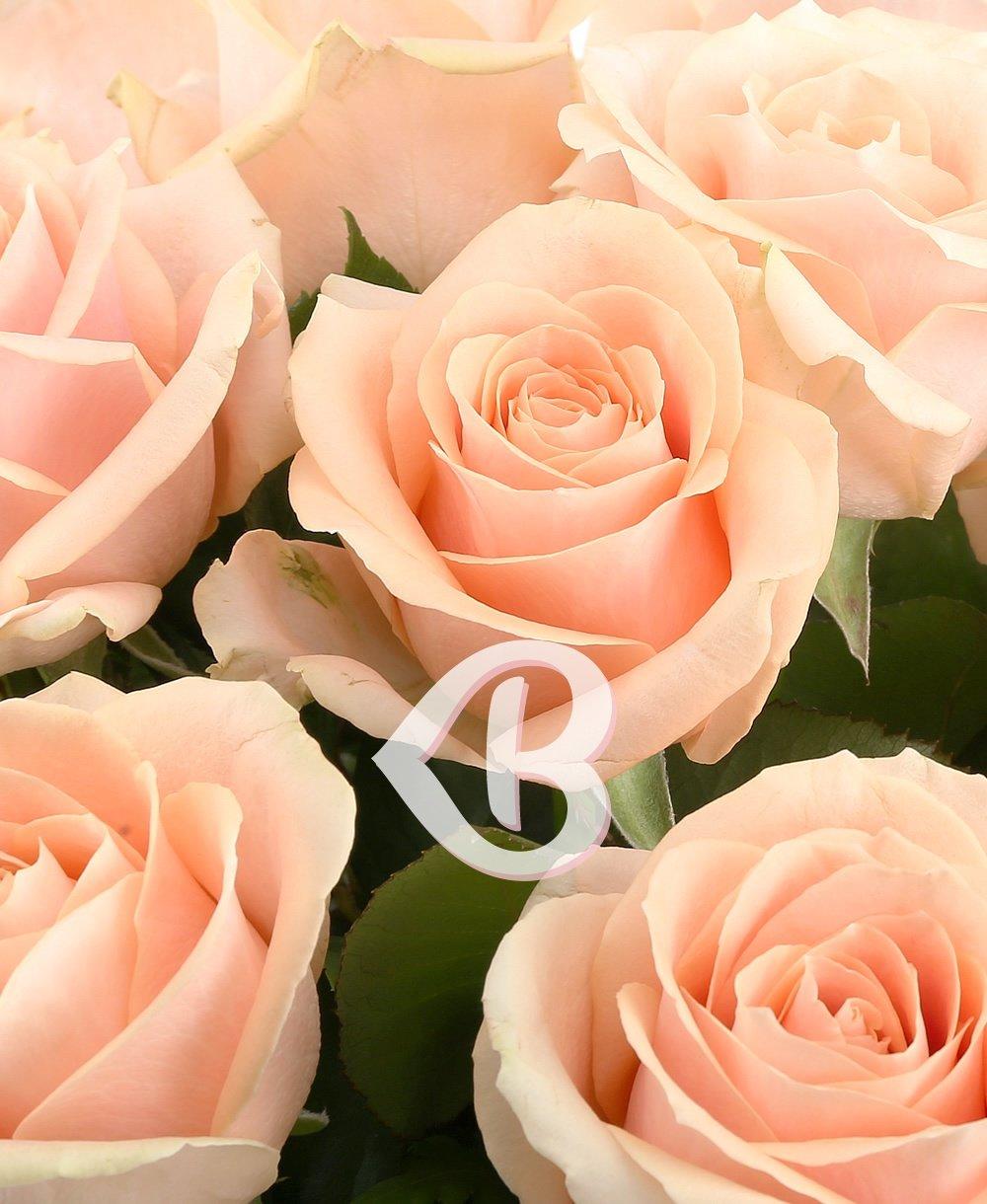 Imaginea produsului 27 Trandafiri Ivoir