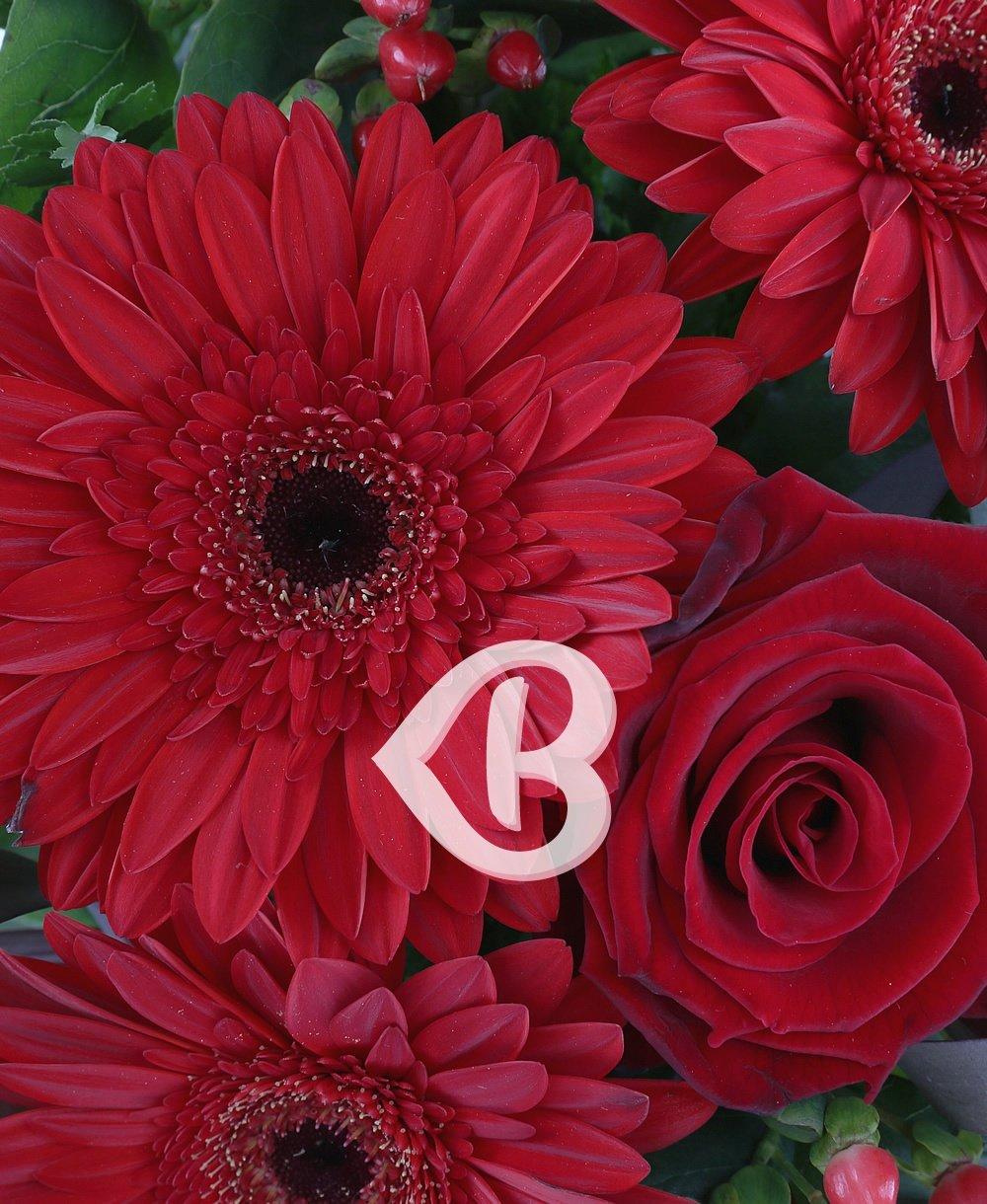 Imaginea produsului Scufiţa roşie