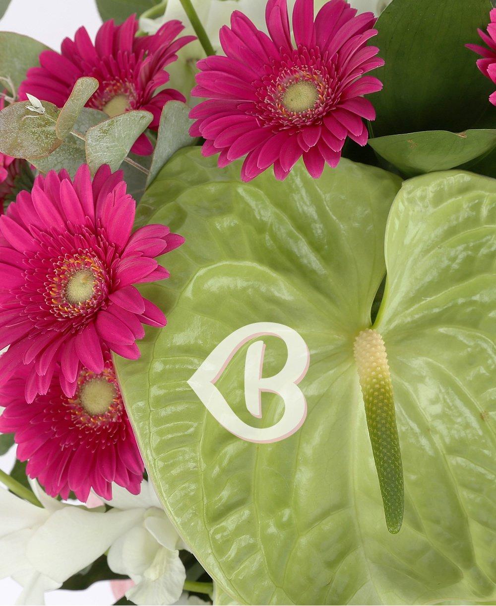 Imaginea produsului frumusețe fragedă