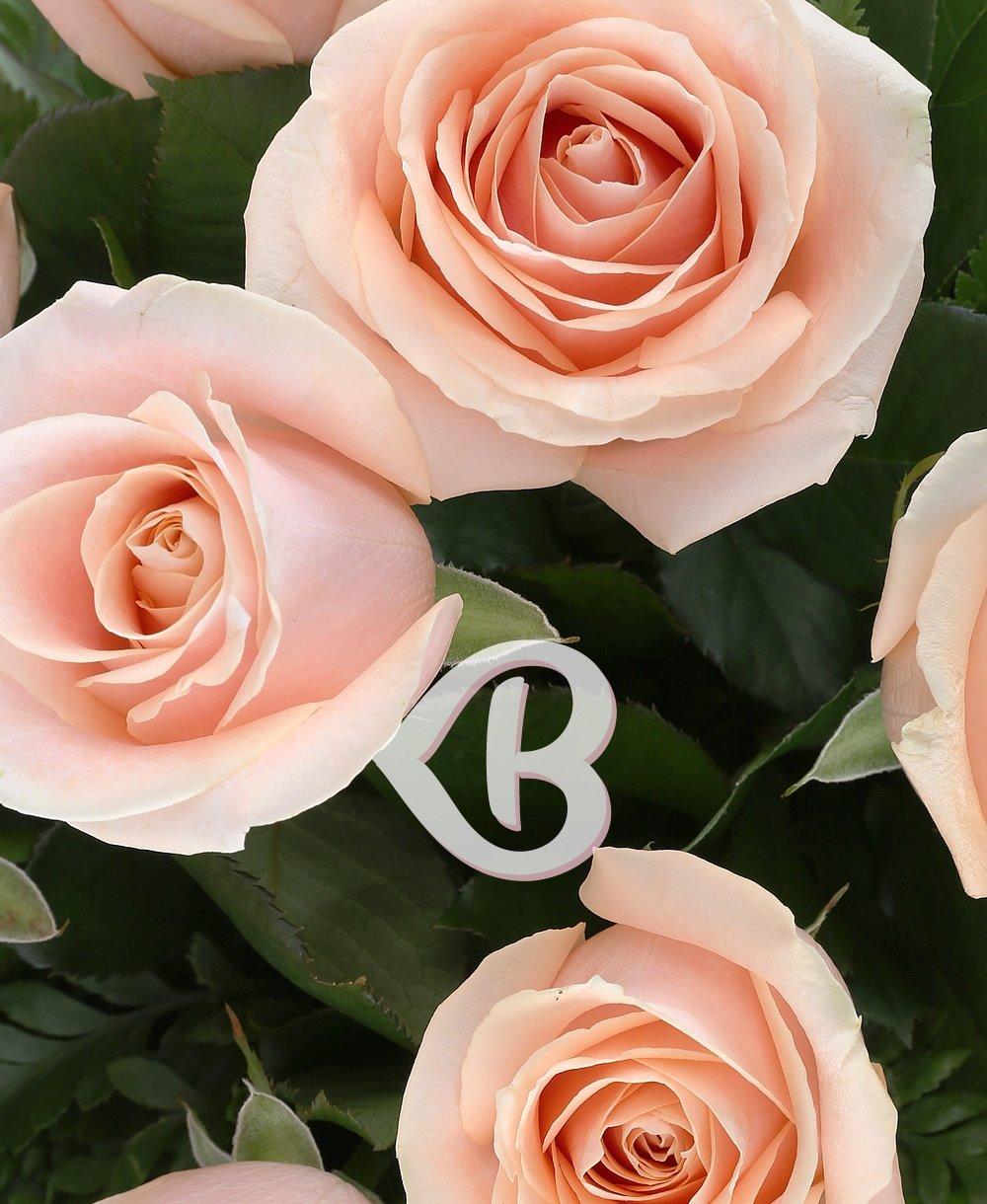 Imaginea produsului 25 Trandafiri Ivoir