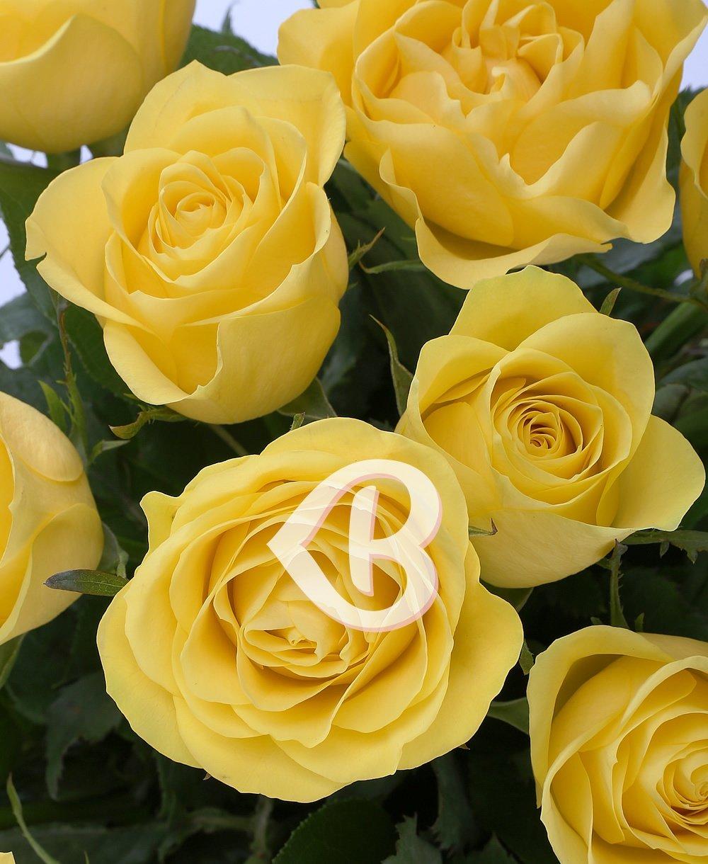 Imaginea produsului 25 trandafiri galbeni