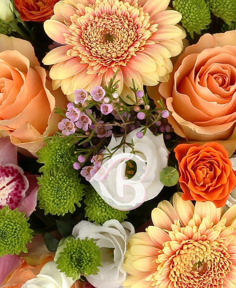 Imaginea produsului Adorația culorilor