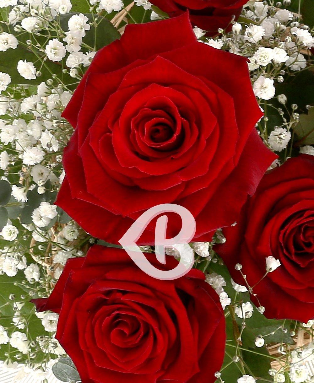 Imaginea produsului Roșu Compact