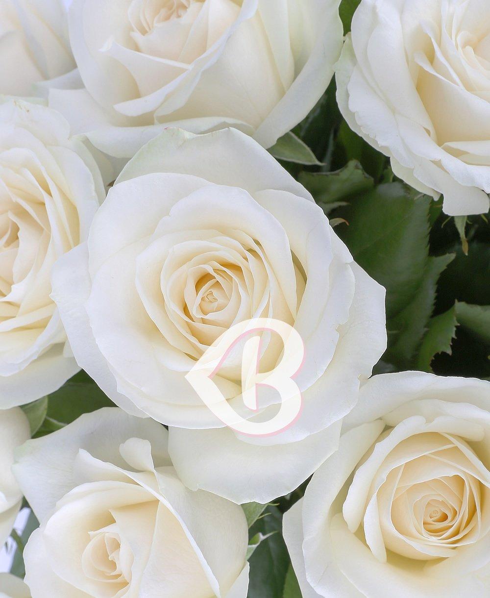 Imaginea produsului buchet 17 trandafiri albi