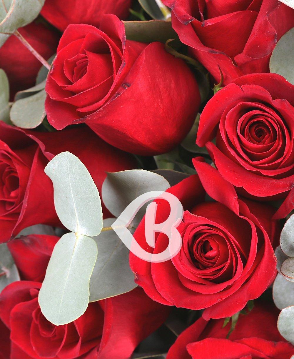 Imaginea produsului Minunăție Roșie