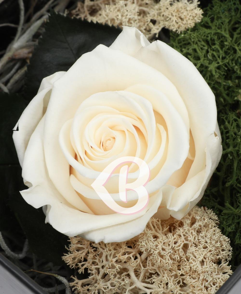 Imaginea produsului Trandafir Alb Criogenat în Cutie Surpriză