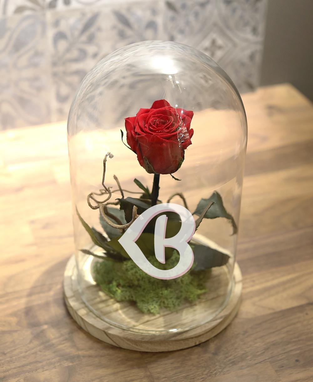 Imaginea produsului Trandafir Criogenat în Cupolă