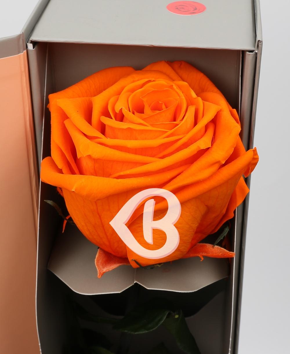 Imaginea produsului Trandafir Portocaliu Criogenat