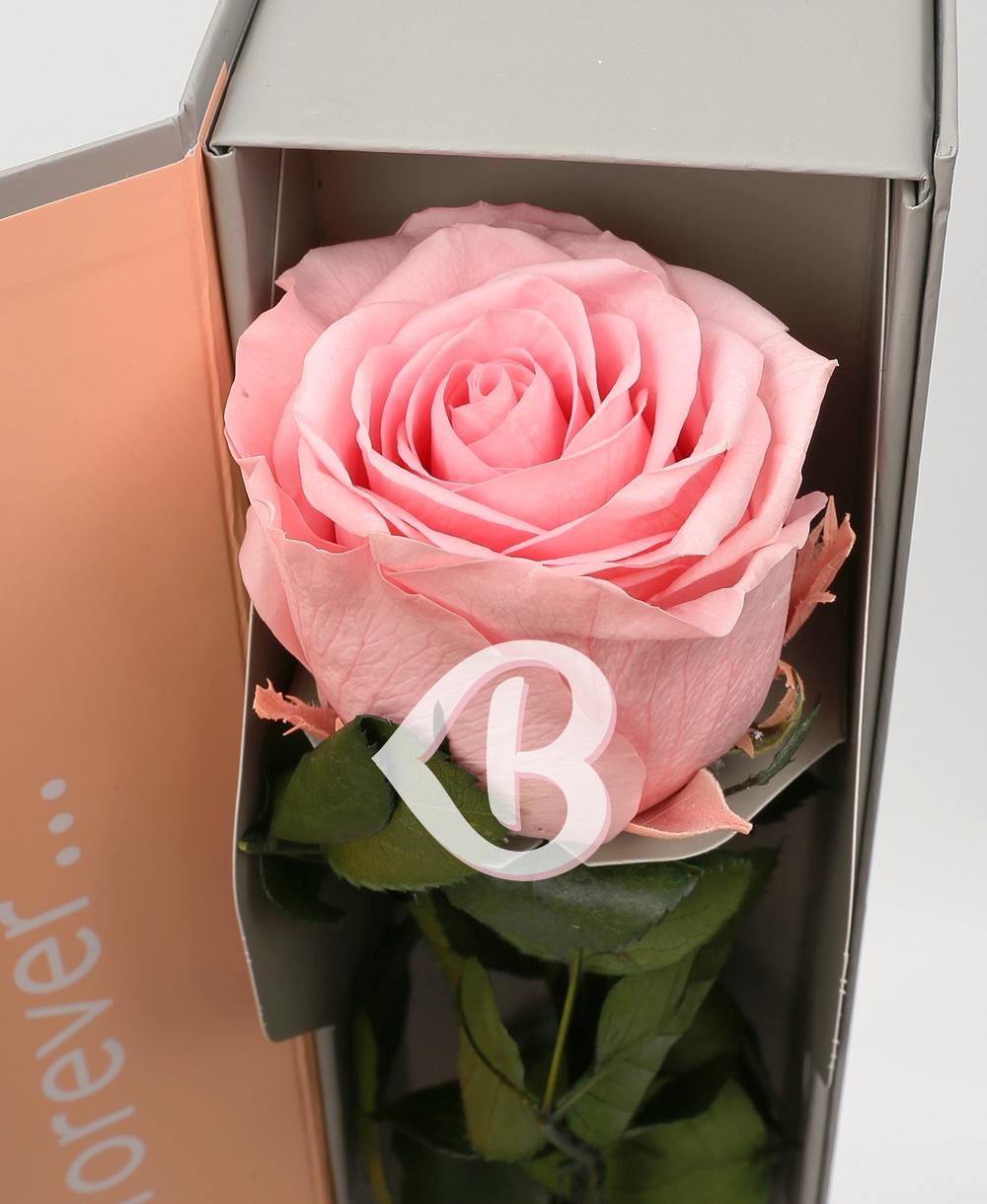 Imaginea produsului Trandafir Roz Criogenat