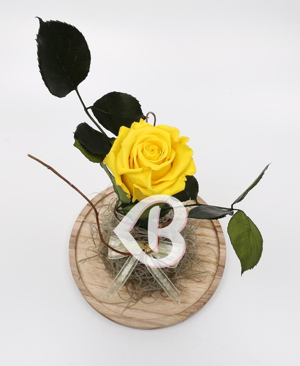 Imaginea produsului Cupolă Cu Trandafir Criogenat Galben