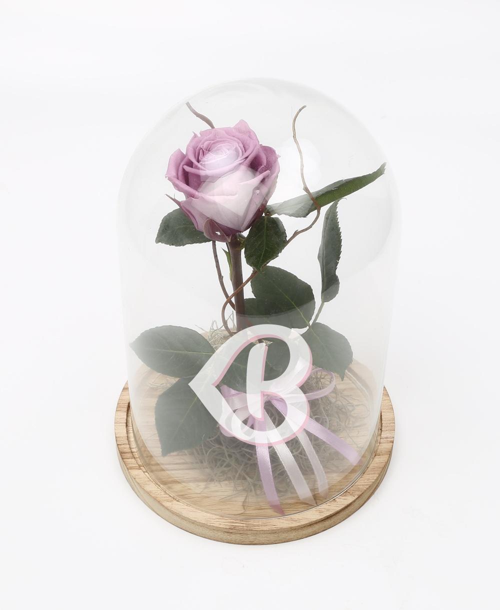 Imaginea produsului Trandafir Criogenat Mov în Cupolă