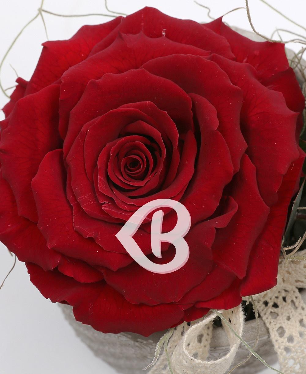 Imaginea produsului King Rose Criogenat Roșu