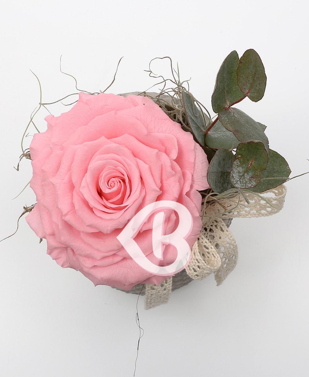 Imaginea produsului King Rose Criogenat Roz