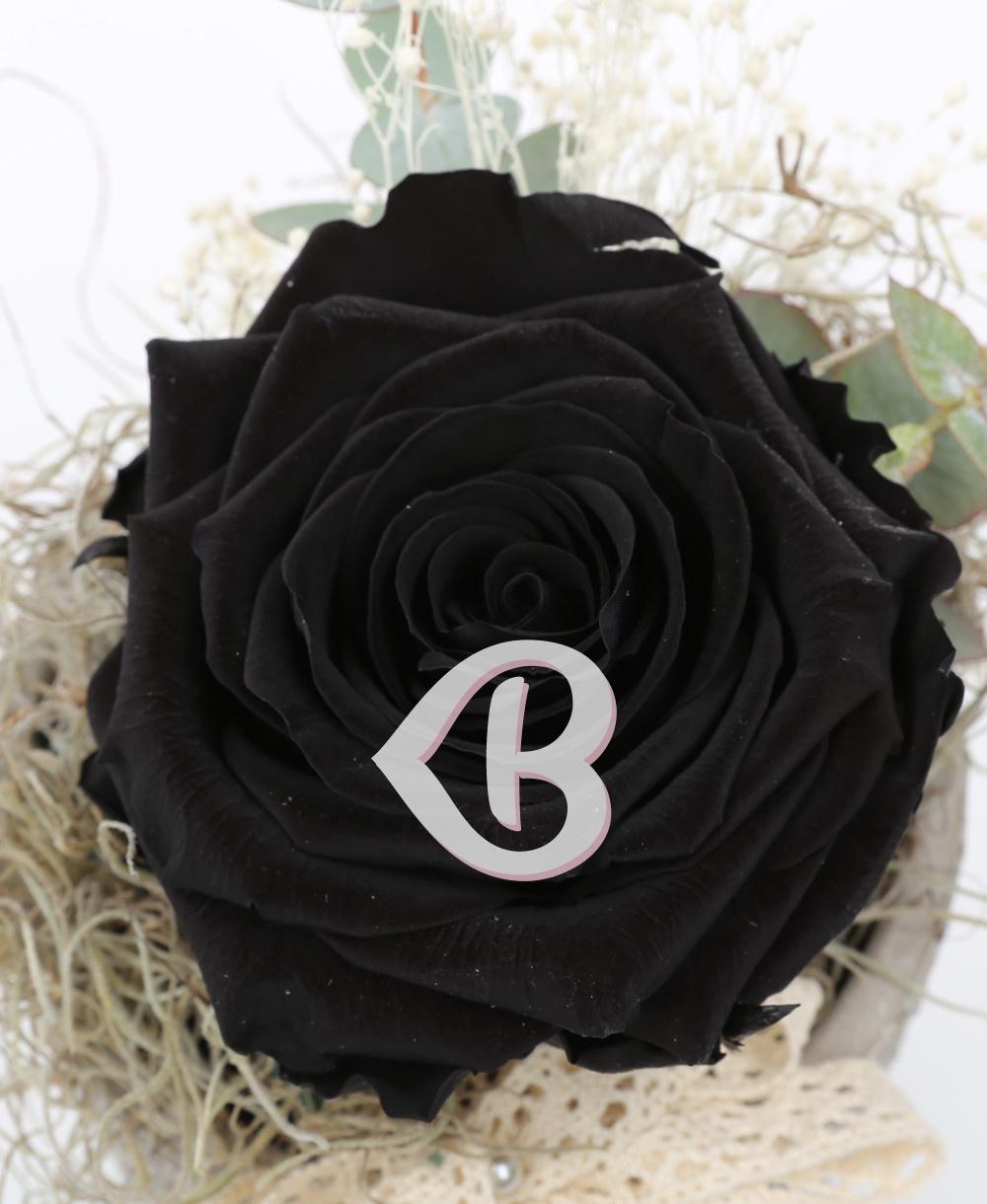 Imaginea produsului Trandafir Criogenat Negru în Vas