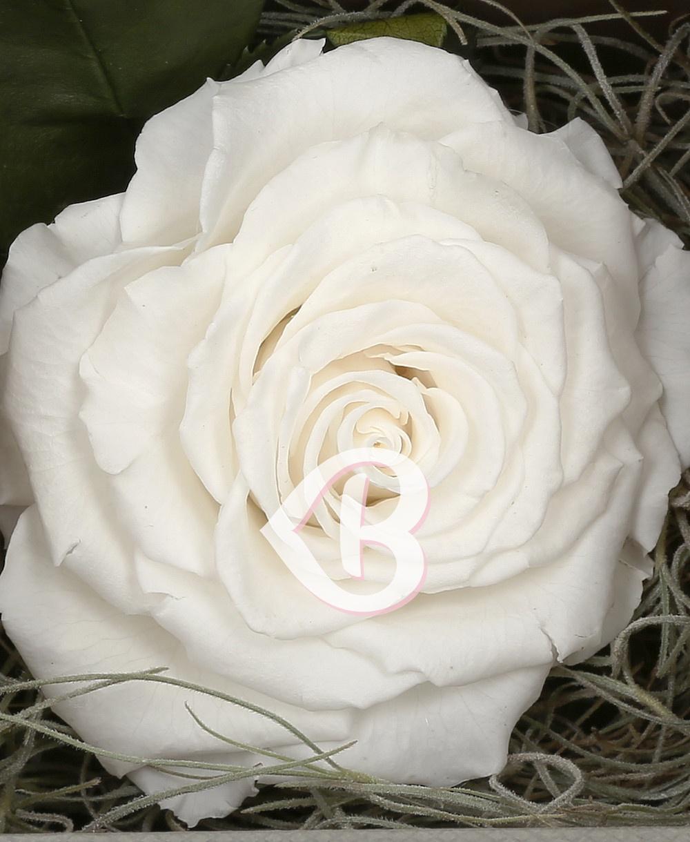 Imaginea produsului Trandafir Criogenat Alb în Cutie