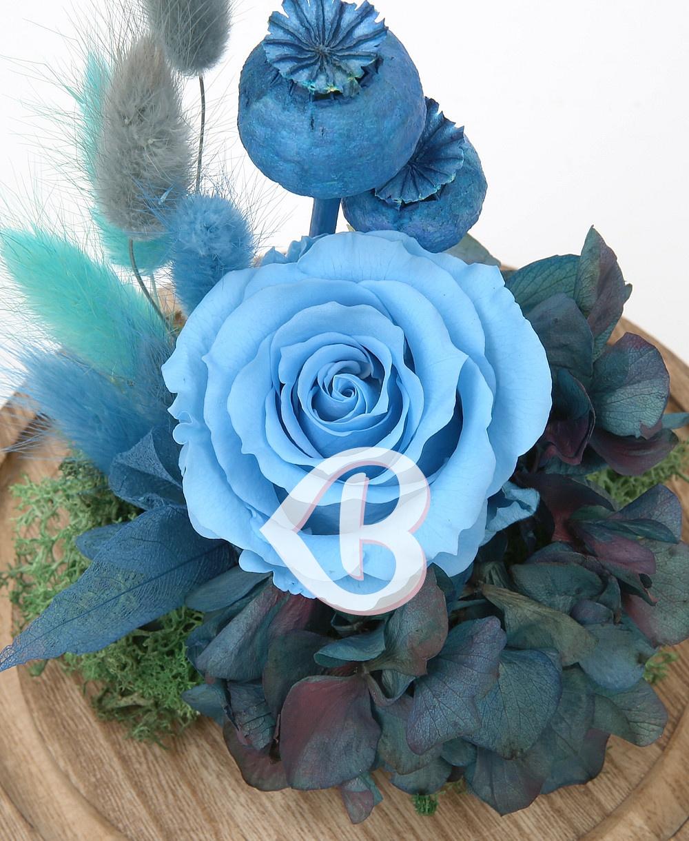 Imaginea produsului Trandafir Bleu Azur în Cupolă