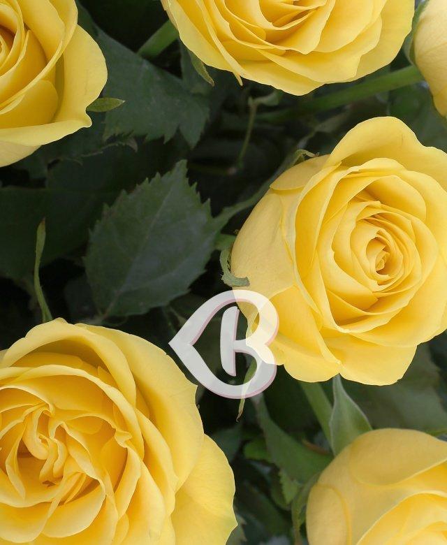 21 trandafiri galbeni