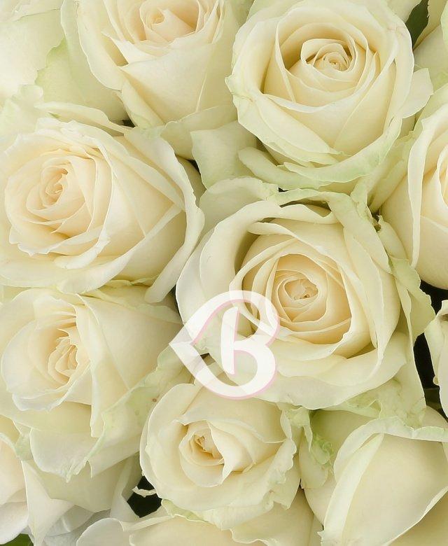 25 trandafiri albi